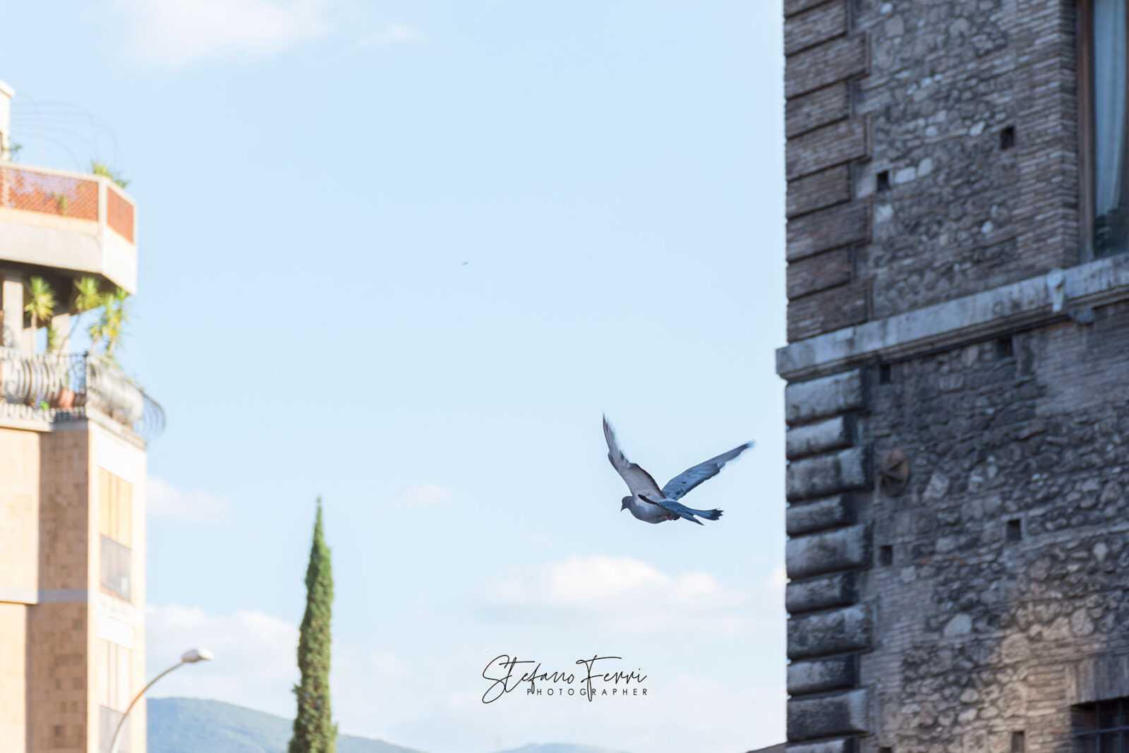 Volo di piccione, ripreso in Piazza Europa, Terni